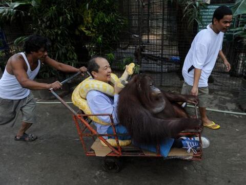 Manny Tiangco pasea a bordo de un carrito, con un orangután y un...