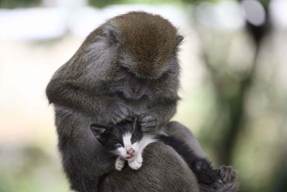 Kimon tiene unos instintos maternales bastante fuertes y tiernos.
