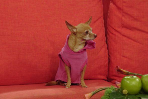 Honey Berry se siente muy cómoda en Despierta América y todos los famoso...