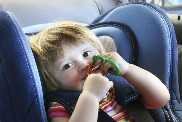 También, lleva su música preferida ¡y anímalo a cantar en el viaje!