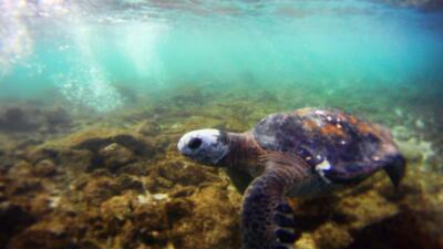 Chile anuncia una de las mayores áreas marinas protegidas del mundo en I...