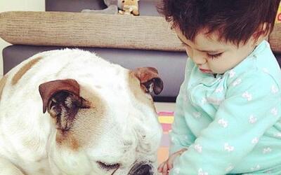 La pequeña Aitana y su bulldog, Fiona, tienen una muy buena relación.