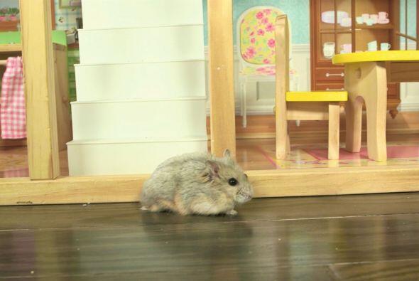 Su mansión, aunque no es precisamente para roedores, sino para ju...