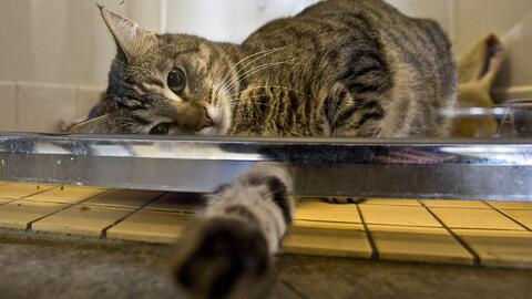 ¿Se le deben extraer las uñas a los gatos?