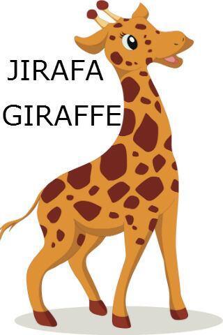 JIRAFA - GIRAFFE