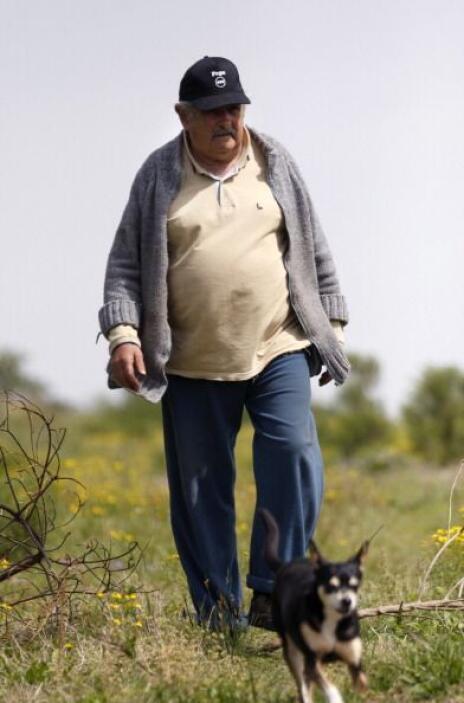José Mujica, presidente de Uruguay, camina con su famosa Manuela. Su per...