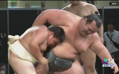 David contra Goliat, versión de lucha sumo