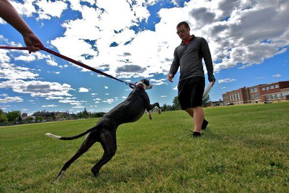Los perros son el mejor amigo del hombre, pero este canino no sólo es es...