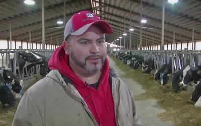 Inmigrante pasa de ordeñar vacas a tener su propia planta lechera en Wis...