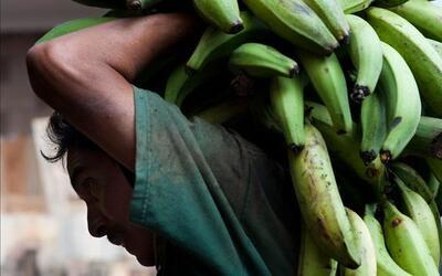 Fomentan la agricultura y los productos Del País