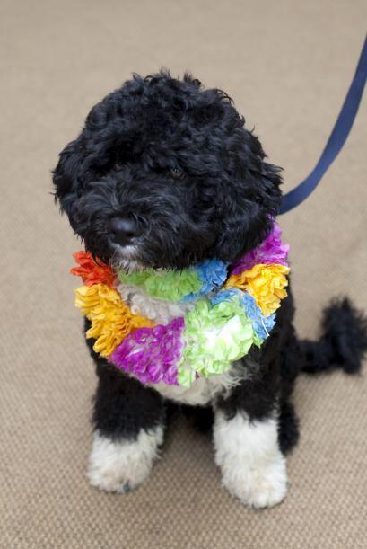 La primera foto que se tuvo de Bo fue con este atuendo 'hawaiano', siend...