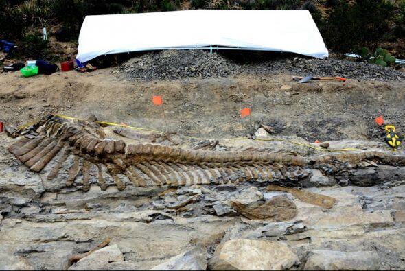 Los paleontólogos quitaron la roca sedimentaria que cubría...