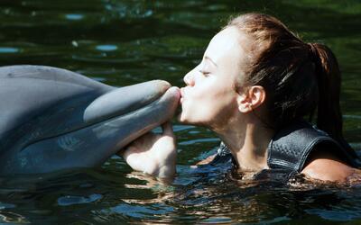 Las bellas nadaron con los delfines