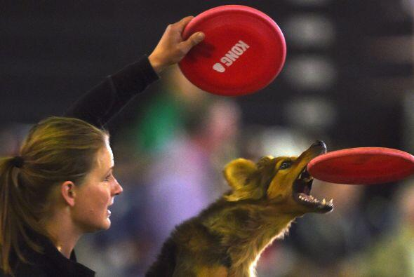 La feria de habilidades para mascotas 'Hund and Katze' se realiza en Dor...