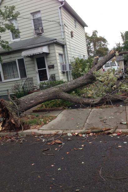 Árbol caído en Montgomery Village. Foto de Tomas Miranda...