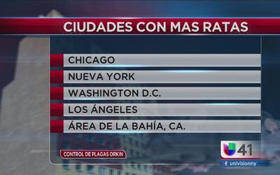 Las ciudades con más ratas