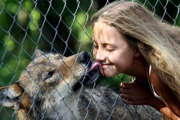 Un beso no se le niega a nadie, mira este dulce peludo.