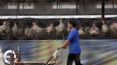 El Senacsa prohibió temporalmente el ingreso enParaguayde animales y p...