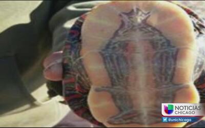 Pescadores dicen haber encontrado imagen de la virgen en caparazón de un...