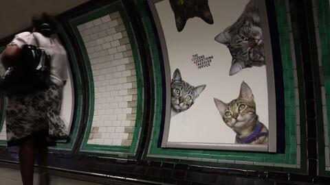 Los gatos se apoderan del metro de Londres