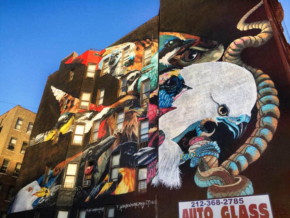 Guía de aves en los grafitis de Nueva York 5%20Audubon_mural_2015_MikeFe...