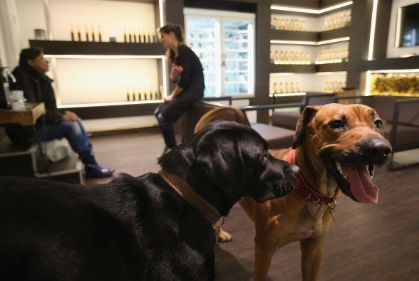 Además, éste puede ser un centro de reunión para los caninos y gatunos,...