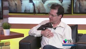 Dale amor y un hogar a una mascota