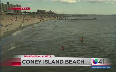 Desalojan playas de Coney Island por posible presencia de tiburones