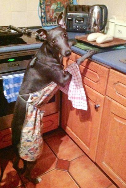 Rupert posa hasta en la cocina.