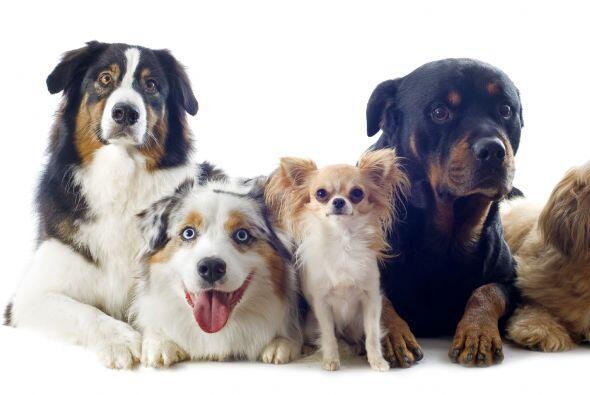 Medición. Los perros no pueden simplemente responder a las pregun...