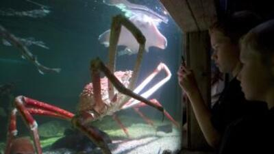 Científicos censaron unas 10,750 especies marinas en todo el mundo para...