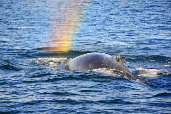Algunas personas creen que al final del arcoíris encontrarán el tesoro d...