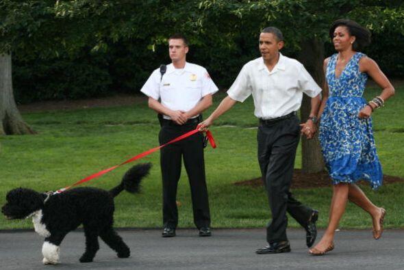 Bo es un perro de agua portugués hembra, es aficionada a jugar en los ja...