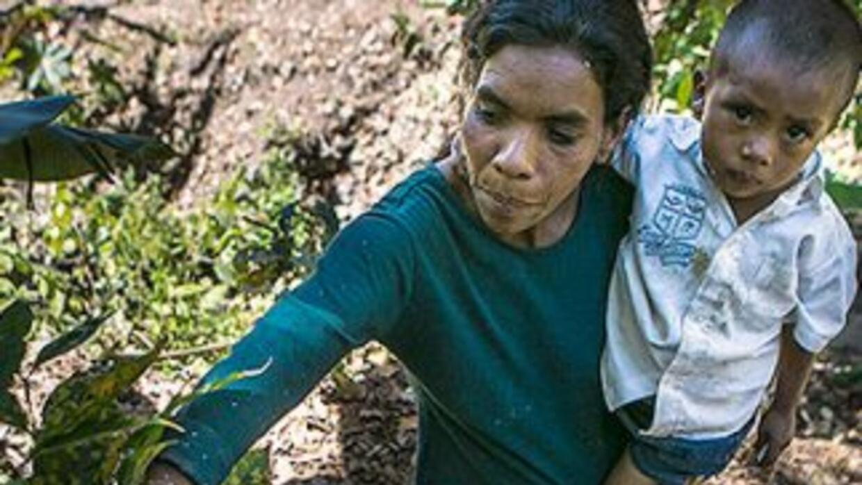 La plaga de roya devasta los cultivos de café en Centroamérica. Deja un...