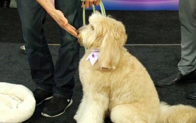 Ten una mascota de diez: Las mejores técnicas para educar a tu perro