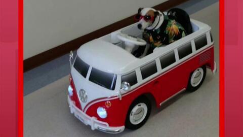 Sancho, uno de los perros que le llevan consuelo y reducen la ansiedad d...