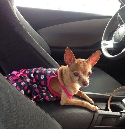 """""""Mientras pongo gasolina mi @HoneyBerryTv muy atenta"""", dijo Ana Patricia..."""
