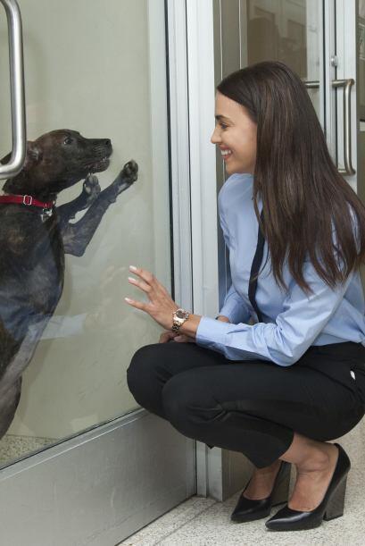 Detrás de la historia de ASPCA hay muchas personas que la han apo...