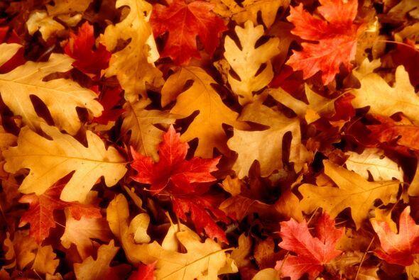 Convierte las hojas secas en una obra de arte. Peguen en una cartulina h...