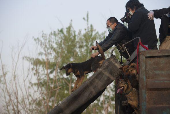 Los activistas piden al gobierno chino una legislación que ponga fin al...