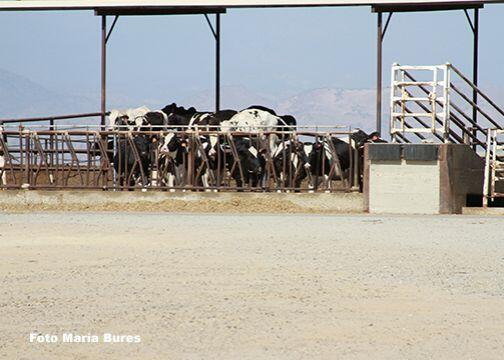 En el condado de Kern un agricultor construyó recientemente cinco sistem...