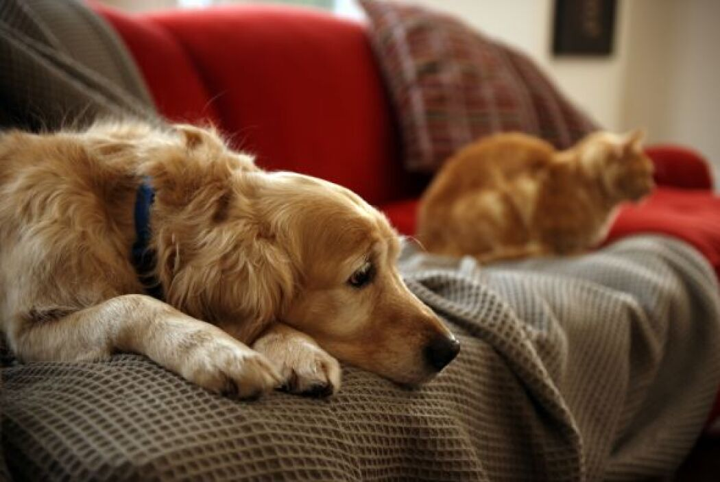 """Pero el estudio muestra que no es así: """"Descubrimos que los perros tuvie..."""