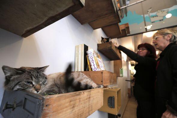 El principal interés de esta chica es el cuidado de los felinos y cree e...