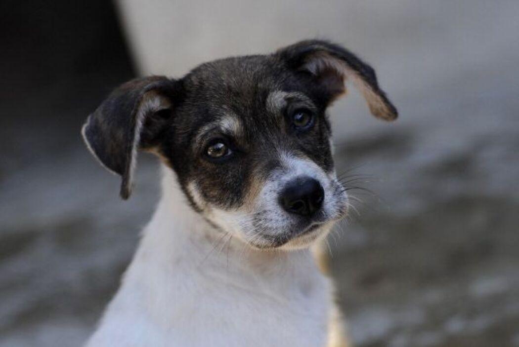 Los perros son seres extraordinarios, te dan amor sincero y único, todos...