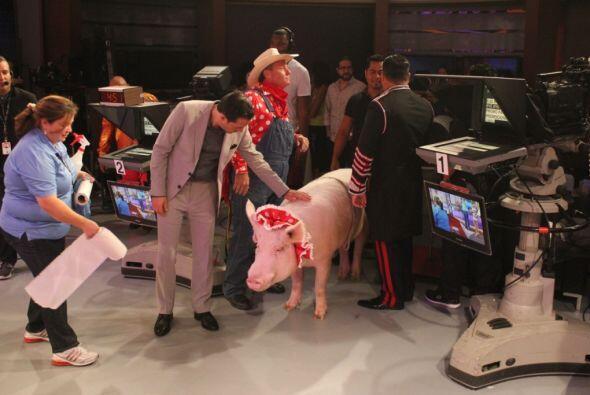 Este cochino vino como parte de la sorpresa que tenía preparada el Circo...