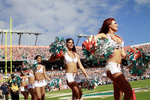 Esta lindura fue elegida por las Miami Dolphins como su representante en...