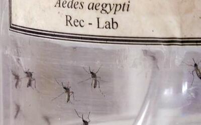 Se aproxima el verano y un posible brote de Zika en el país