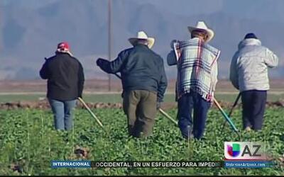 Intoxicación afecta a miles de trabajadores