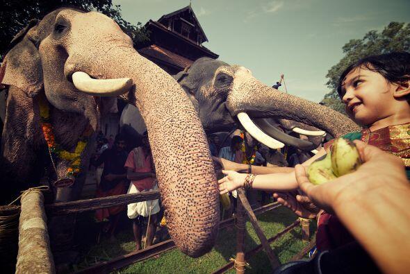 Para ellos alimentar a los elefantes es una forma de protección p...