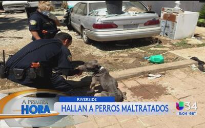 Hallan a decenas de perros muertos y desnutridos en una casa de Riverside